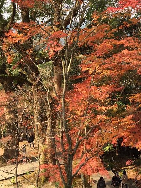 H30.11.20kamiyoshi3.jpg