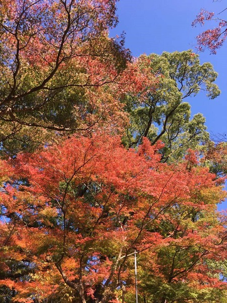 H30.11.7hashikawa6.jpg