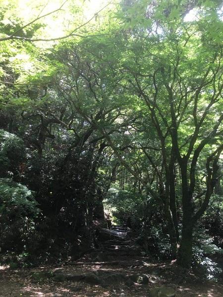 H30.6.9hashikawa43.jpg